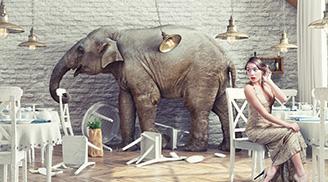 코끼리와 기수가 함께 신나게 하라